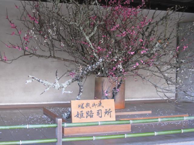 09-sp-okaban-rep71.JPG