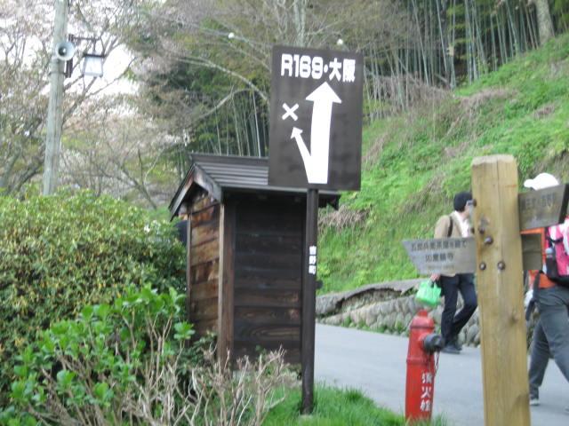09-yoshino-sakura263.JPG