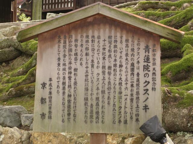10-koyo-kyoto611.JPG