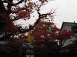 10-koyo-kyoto645.JPG