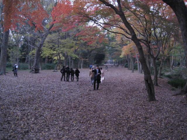 10-koyo-kyoto901.JPG