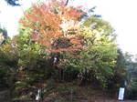 10-koyo-yoshino74.JPG