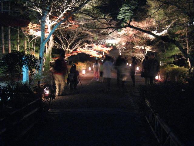 11-koyo-kyoto229.JPG