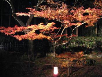 11-koyo-kyoto230.JPG