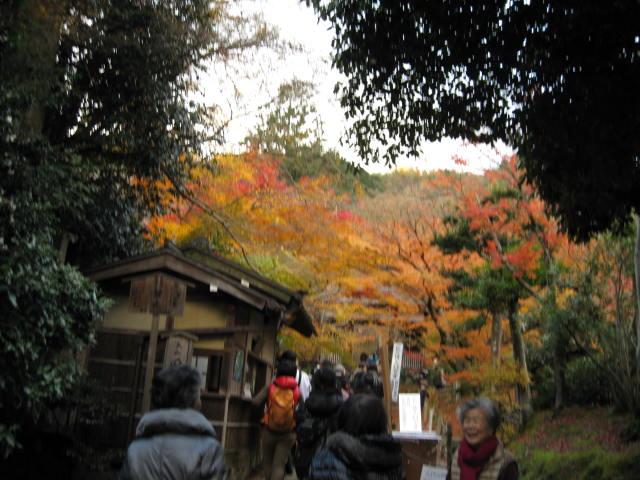 12-koyo-kyoto236.JPG