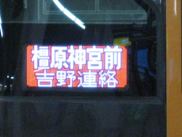 12-sakura-kyoto141.JPG