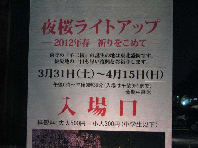 12-sakura-kyoto147.JPG