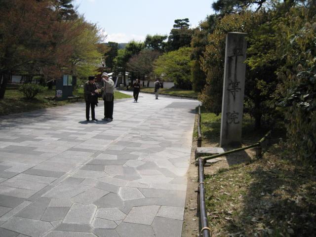 12-sakura-kyoto174.JPG