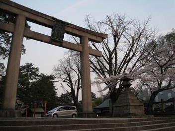 12-sakura-kyoto2.JPG