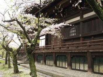 12-sakura-kyoto23.JPG
