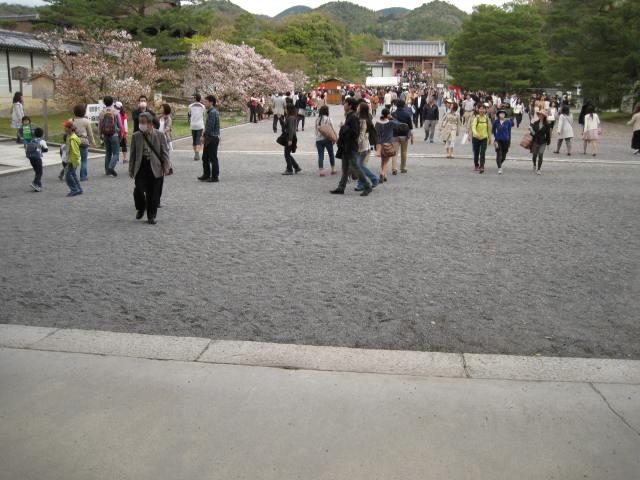 12-sakura-kyoto366.JPG