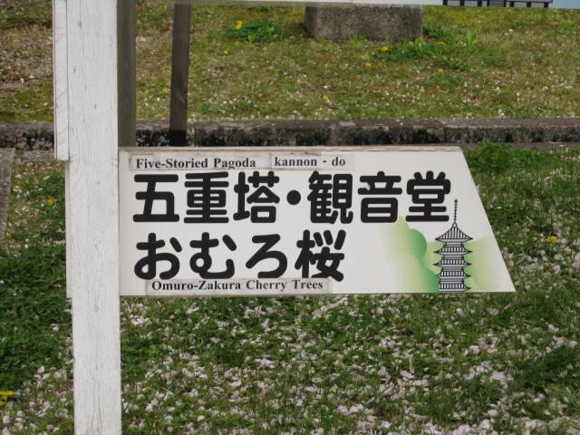 12-sakura-kyoto368.JPG