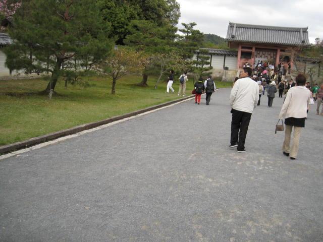 12-sakura-kyoto371.JPG