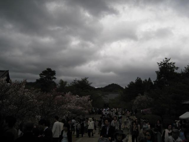 12-sakura-kyoto373.JPG