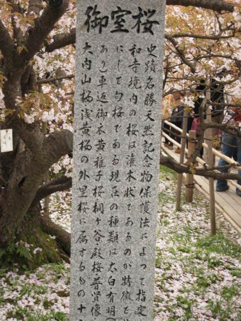 12-sakura-kyoto374.JPG