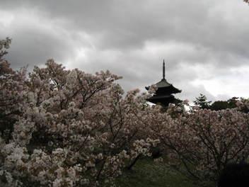 12-sakura-kyoto379.JPG