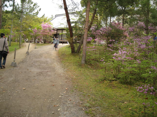 12-sakura-kyoto384.JPG