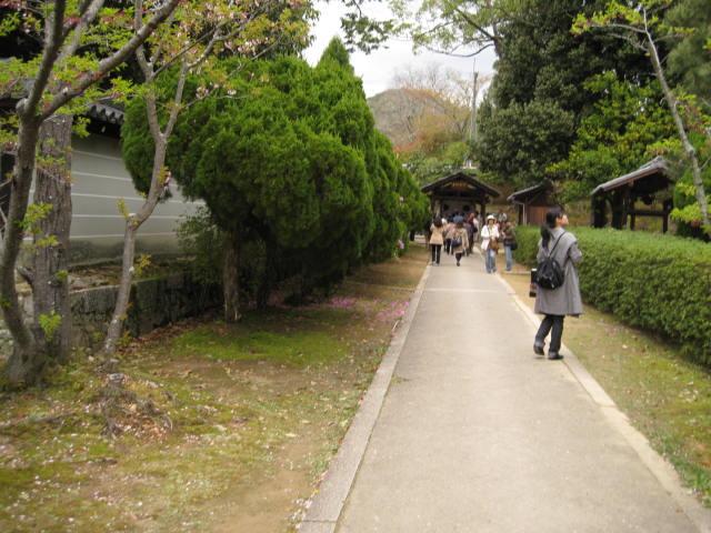 12-sakura-kyoto388.JPG