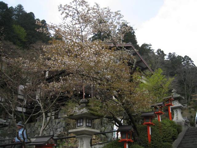 12-sakura-kyoto407.JPG