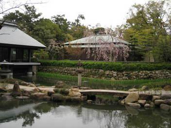 12-sakura-nishi-jinja3.JPG