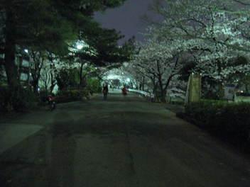 12-yozakura-syukugawa3.JPG