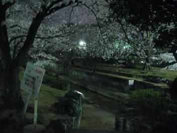 12-yozakura-syukugawa4.JPG