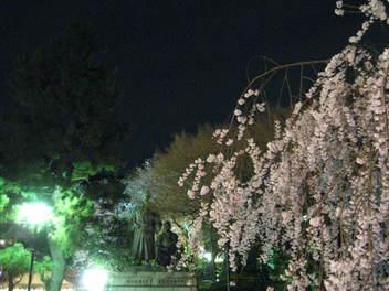 13-sakura-kyoto140.JPG