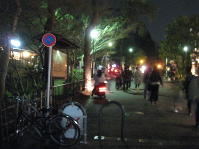 13-sakura-kyoto141.JPG