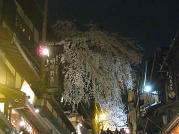 13-sakura-kyoto144.JPG