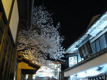 13-sakura-kyoto147.JPG