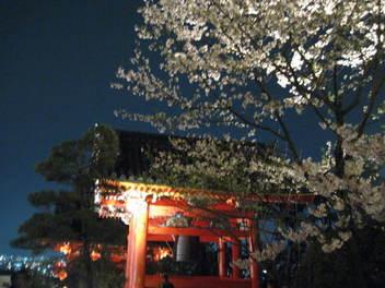 13-sakura-kyoto150.JPG