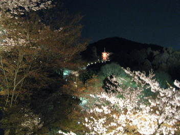 13-sakura-kyoto152.JPG