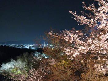 13-sakura-kyoto153.JPG