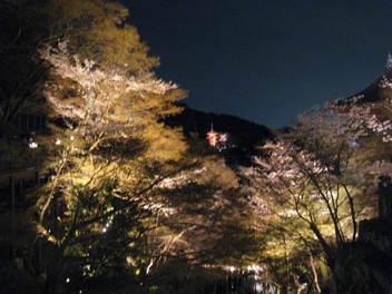 13-sakura-kyoto155.JPG