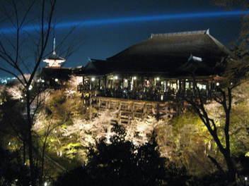 13-sakura-kyoto158.JPG