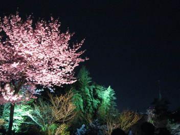 13-sakura-kyoto163.JPG