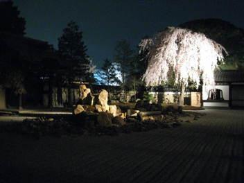 13-sakura-kyoto167.JPG