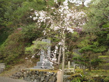 13-sakura-kyoto233.JPG