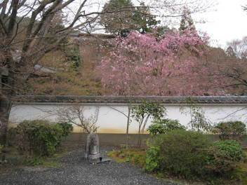 13-sakura-kyoto243.JPG