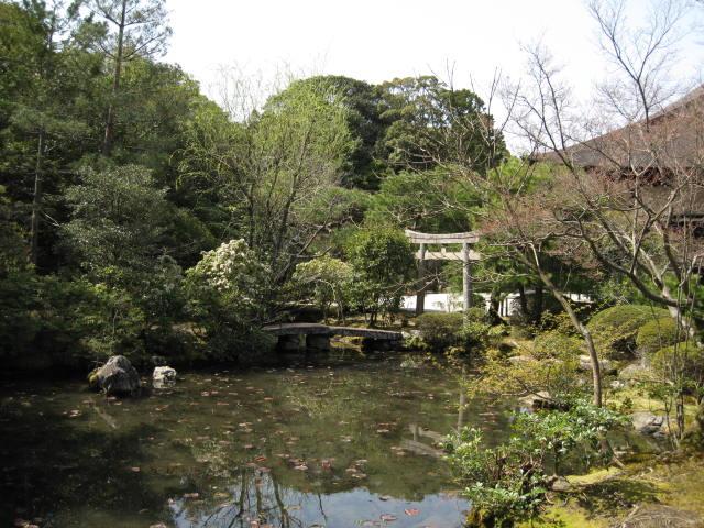 13-sakura-kyoto26.JPG
