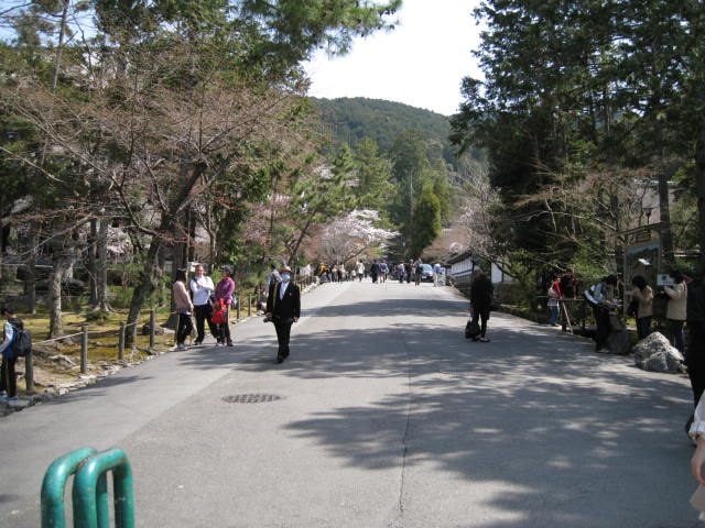 13-sakura-kyoto32.JPG