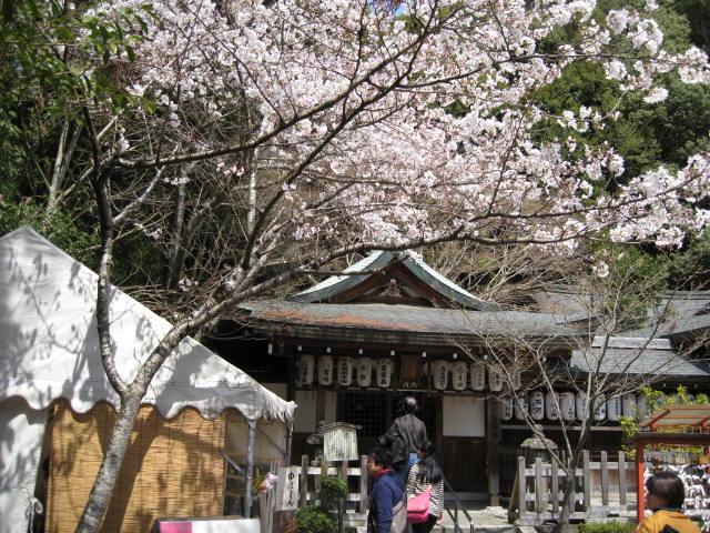 13-sakura-kyoto47.JPG