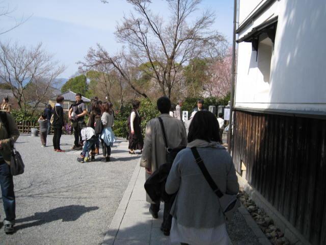 13-sakura-kyoto75.JPG