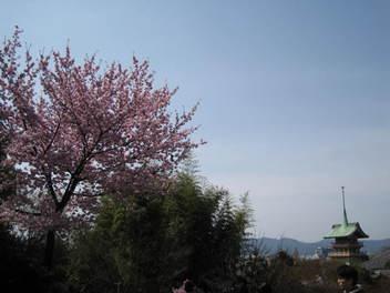 13-sakura-kyoto76.JPG