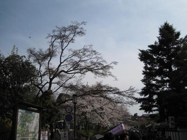 13-sakura-kyoto88.JPG