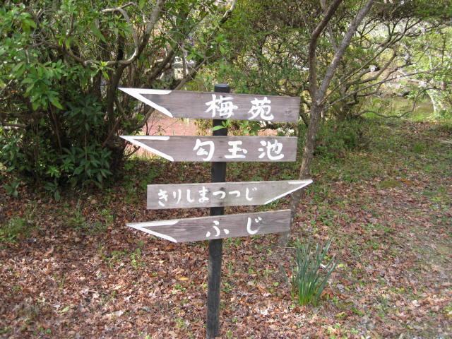 13-ume-kyoto21.JPG
