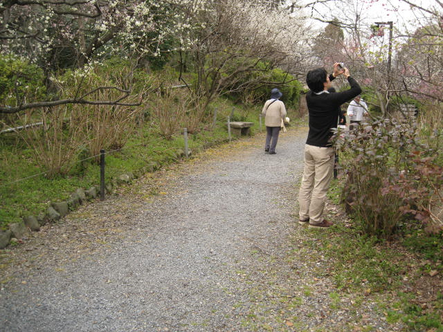 13-ume-kyoto24.JPG
