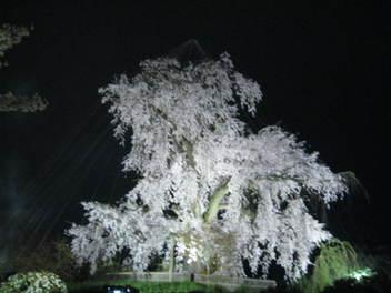 14-sakura-kyoto15.JPG