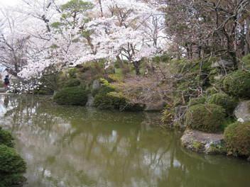 14-sakura-kyoto6.JPG