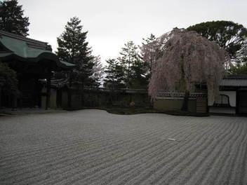 15-sakura-kyoto13.JPG